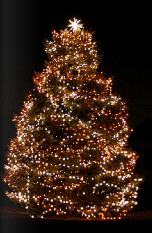 Christmas Tree 2 resized 600
