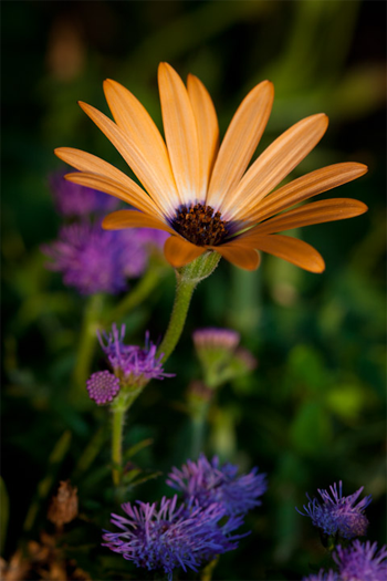 Beautiful Northeast Ohio Spring Flower Color
