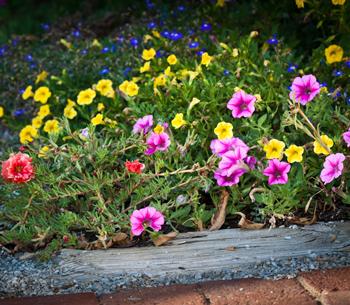 Beautiful Northeast Ohio Spring flowering landscape