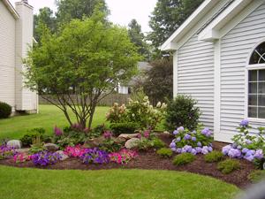 landscape plant design