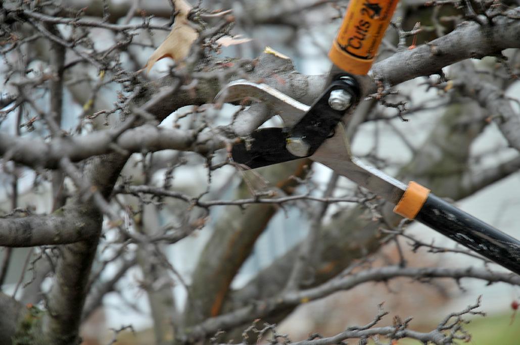Winter Dormant Pruning Image