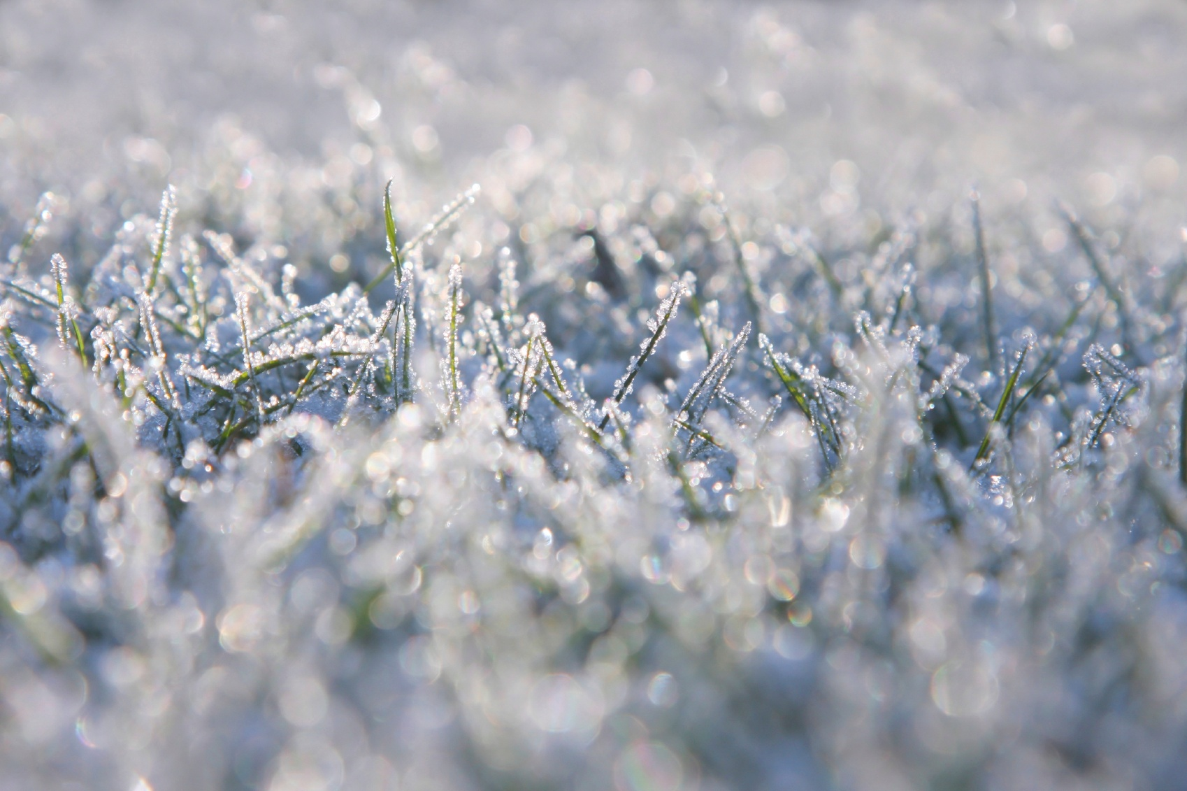 frosted-grass.jpg