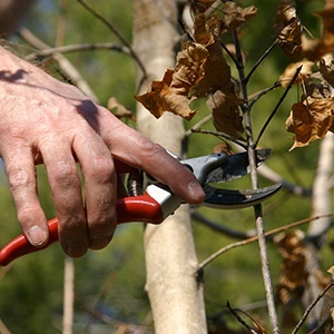 dormant-pruning.jpg