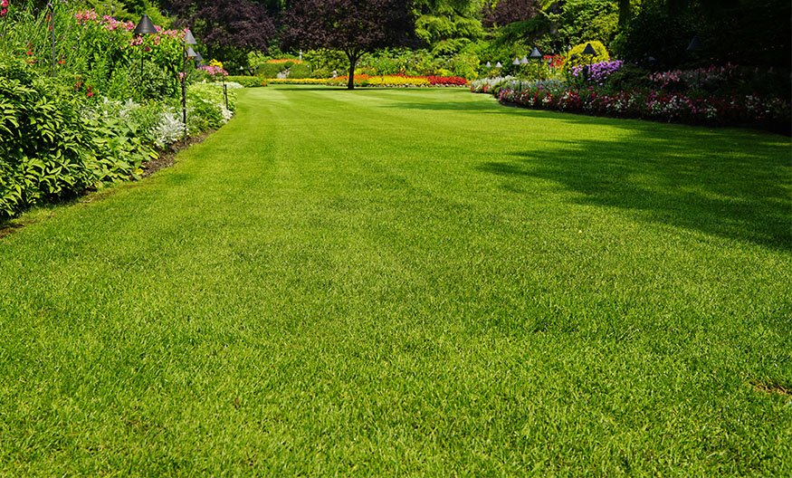 personalized-lawn-care-imgsCTA-Common-Myths-1