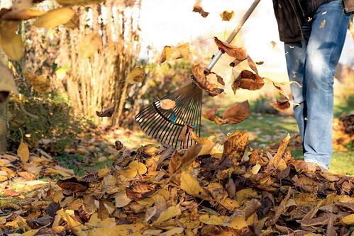 raking-leaves-1