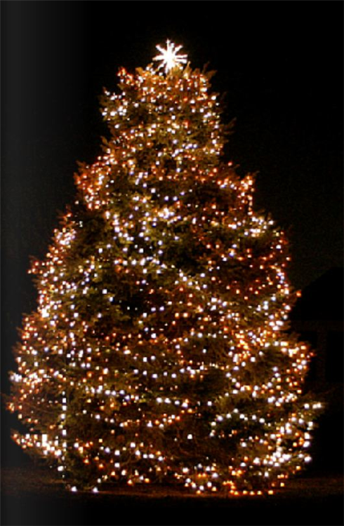 christmas-tree-2.png